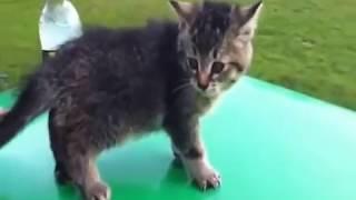 Смотреть видео приколы с котами 83