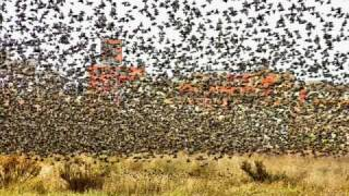 Franco Battiato Gli uccelli remix  - As a Bird - bootleg  Jack Edelwood