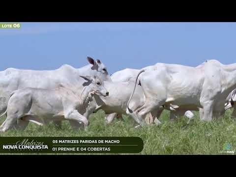 05 MATRIZES PARIDAS - 01 PRENHE E 04 COBERTAS