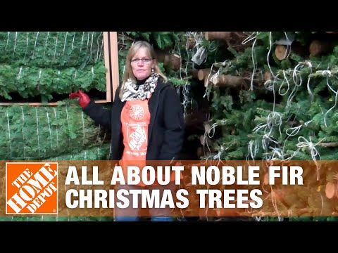 All About Noble Fir Christmas Trees - The Home Depot