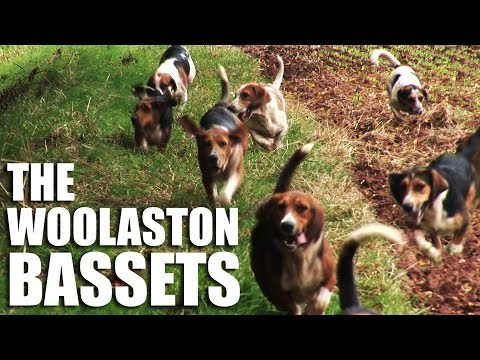 The Woolaston Bassets