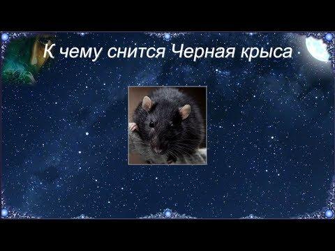 К чему снится Черная крыса (Сонник)