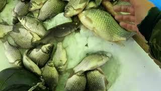 Рыбалка озеро пески курганская область