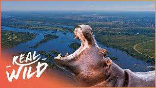 The Beautiful Habitants Of The Zambezi River! | Zambezi: Force Of Life | Real Wild