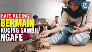 Keseruan Bermain Kucing di Kafe Kucing Pertama di Surabaya