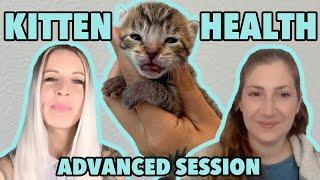 Advanced Kitten Care: Assessing & Stabilizing Sick Kittens