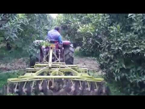 Il girasole di zucca semina il vantaggio da un verme