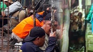 Kondisi Harimau yang Terjebak di Lorong Ruko di Riau, Petugas Masih Berupaya Lakukan Evakuasi