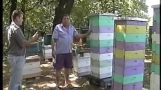 Если бы не многокорпусные ульи, я бы бросил пчеловодство! Савельев Владимир Иванович.