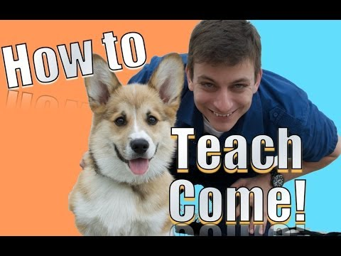 How To Train A Stubborn Dog To Come When Called