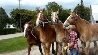 Mackinac Island horses leaving for the season.