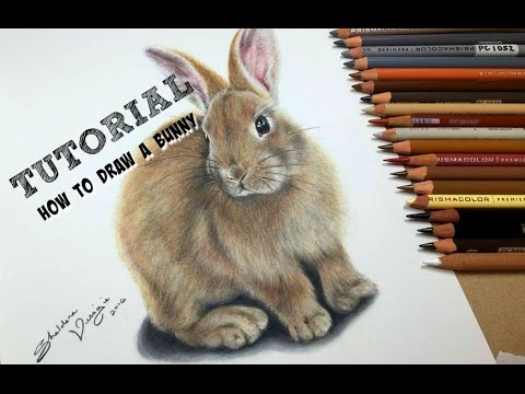 drawing a realistic bunny tutorial by sheldene fine art