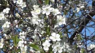 Весна 2012 года.Природа России.