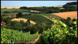 preview picture of video 'Das pfeffrige Weinjahr...'