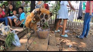 ตะลอนลาวก่อนไปเวียดนาม EP22:หาซื้อเห็ดปลวก ได้ซื้อลิงลมเป็นตาสงสารหลาย ภารกิจใหม่นำลิงลมไปปล่อยป่า