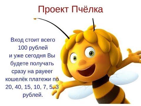 Как заработать в интернете со 100 руб сделать 100 000 руб проект пчёлка