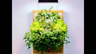 Выращивания зелени дома
