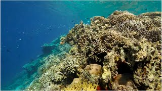 Coral Resilience: Interventions To Save Coral Reefs