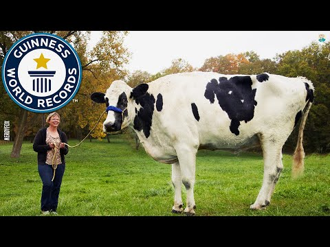 , title : 'Top 10 Biggest Cattle Breeds In The World