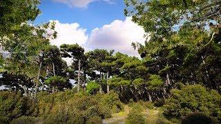 Εσύ γνωρίζεις ότι ένας άνθρωπος αρκεί για να σωθεί ένα δάσος; Title