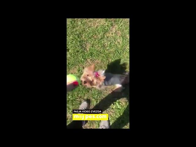Stela – Video natečaj 2020 – Revija Moj Pes #Stela #MojPes