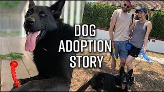 We Finally Got A Dog | German Shepherd Adoption Story