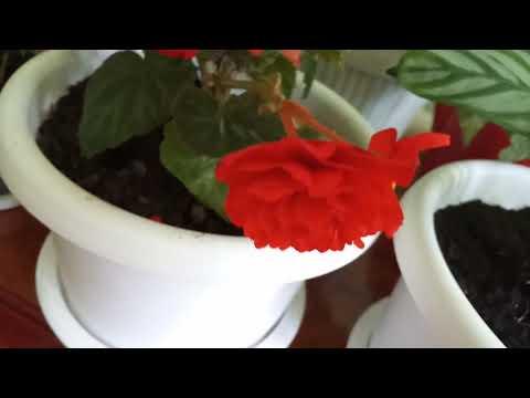 Маленький обзор красивых комнатных цветов