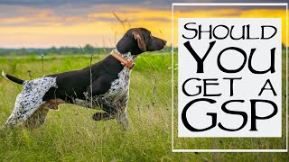 5 Things To Consider When Getting A German Shorthair Pointer