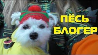 Утро глазами щенка | пёс - блогер