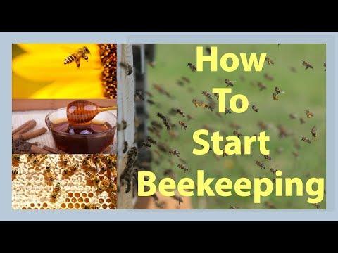 , title : 'Beekeeping How To Start Beekeeping In 2021