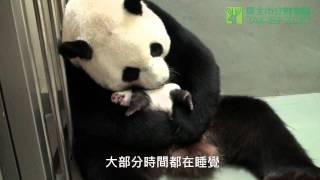 世上只有媽媽好 / The Best Mom (English Subtitles Available)
