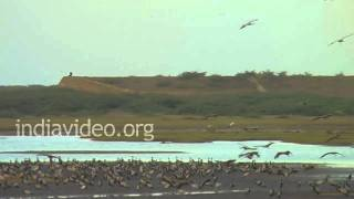 Water birds in Gujarat