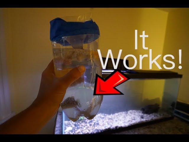DIY Creek Fish Trap - FIRST FISH TANK ADDITION
