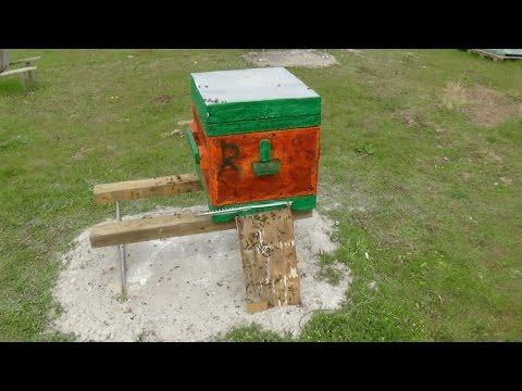 Переселение пчелосемей в чистый улей на пасике