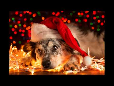 ВЕСЕЛОЕ поздравления с годом собаки