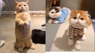 Meilleures Vidéos Drôles de Chat et de Chien 🐶🐱- Best Funny DOGS et CATS #175
