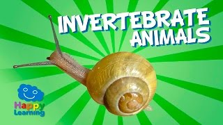 Invertebrate Animals | Educational Video for Kids