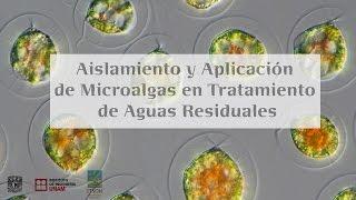 Aislamiento y aplicación de microalgas en tratamiento de aguas residuales