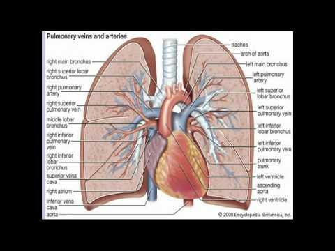 กายภาพบำบัดจาก thrombophlebitis