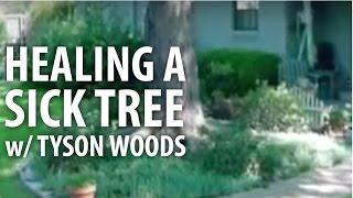 Healing A Sick Tree w/ Tyson Woods - The Dirt Doctor