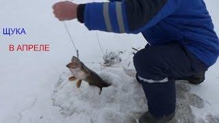 Капкан рыболовный для ловли щуки
