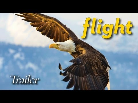Flight: The Genius of Birds Blu-ray movie- trailer