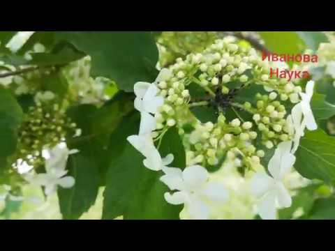 Характерные признаки болезней и вредителей в саду
