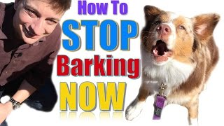 How to Teach Your Dog Not to Bark Humanely and Effectively: 3 Things You Can Do Right Now