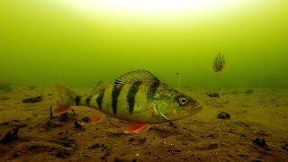 Как ведет себя отводной поводок под водой