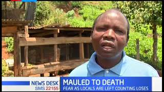 Residents in Murang'a counting loses after 40 sheep are killed by wild animal