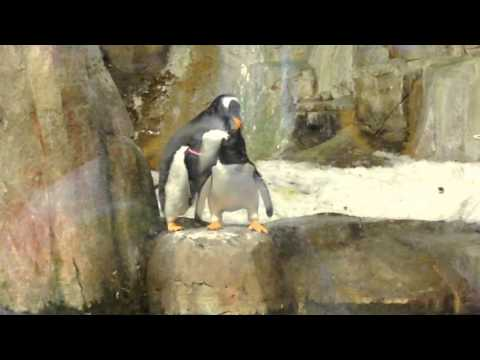 Penguin is Caught Cheating by an Angry Girlfriend