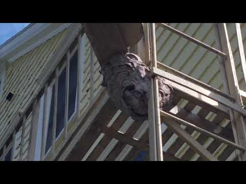 We noticed something interesting while treating an apartment complex in Manchester, NJ —a hornet's nest on the fire escape!