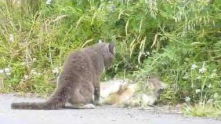 stop cats in garden urine