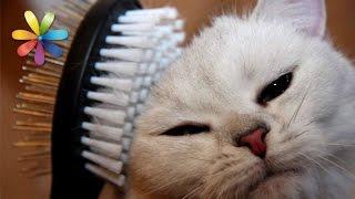 Как бороться с линькой у кошек? – Все буде добре. Выпуск 674 от 22.09.15